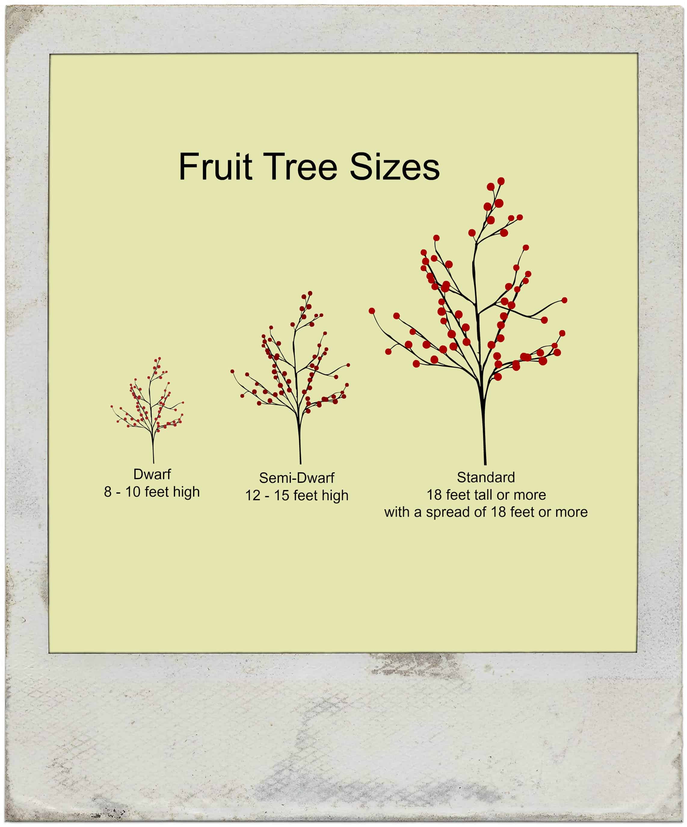 What does dwarf fruit tree mean home garden joy fruit tree sizes buycottarizona