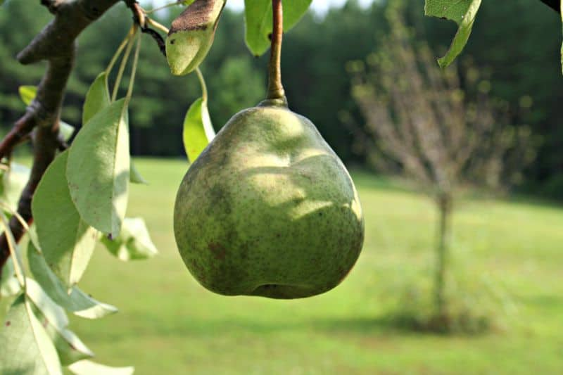 where to plant fruit trees