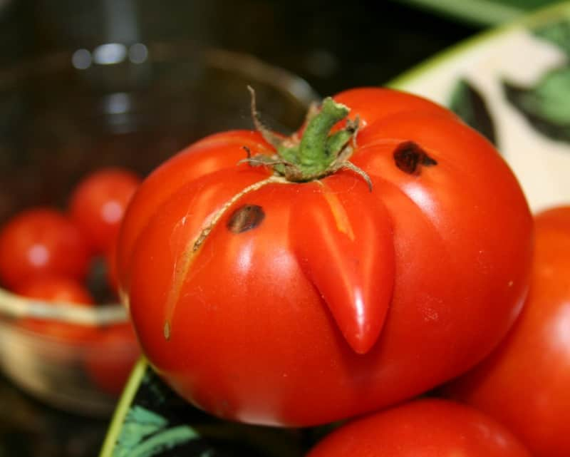 What Causes Tomato Nose?