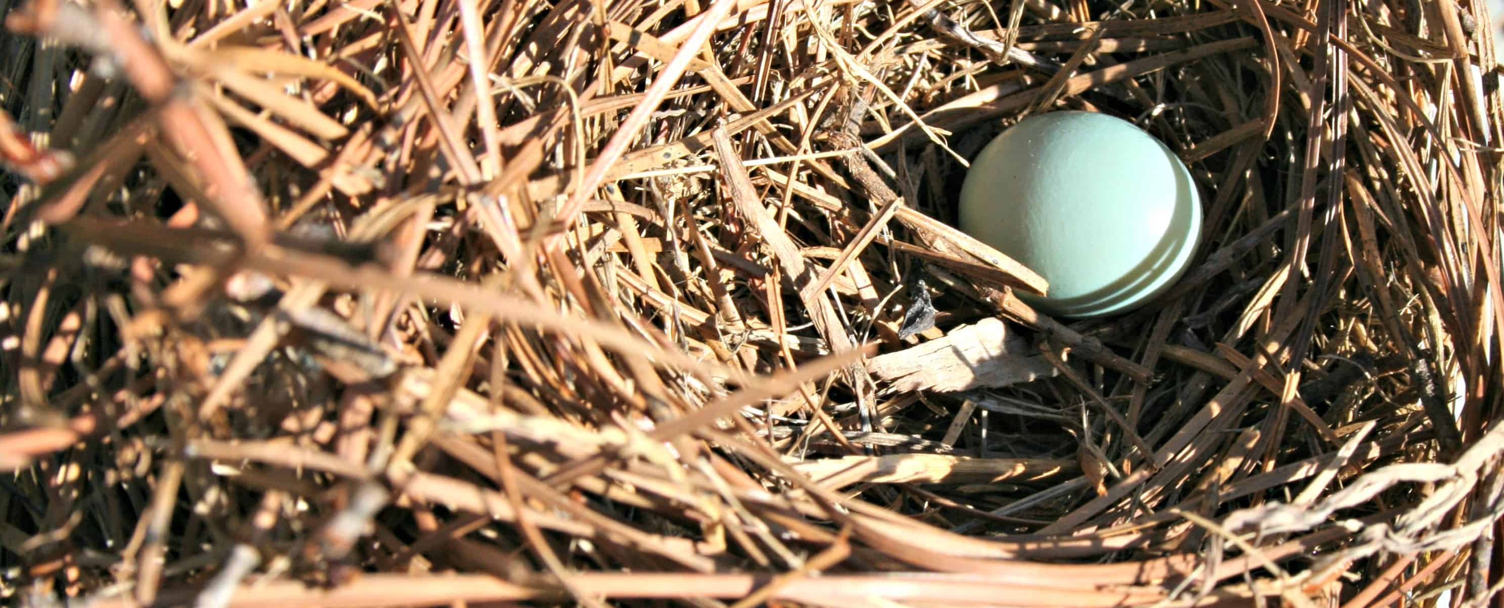 Bluebird Nests - Home Garden Joy