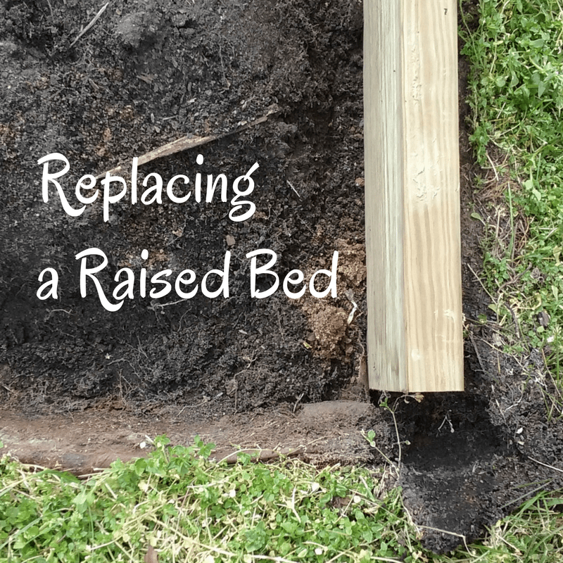 Replacing a Raised Garden Bed