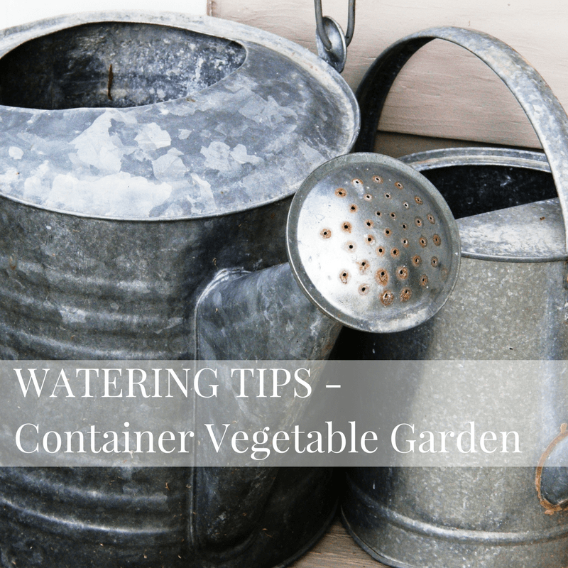 watering tips for a container vegetable garden