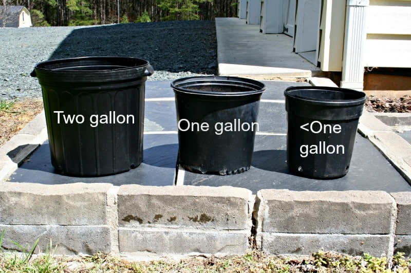 pots for vegetables for container gardening
