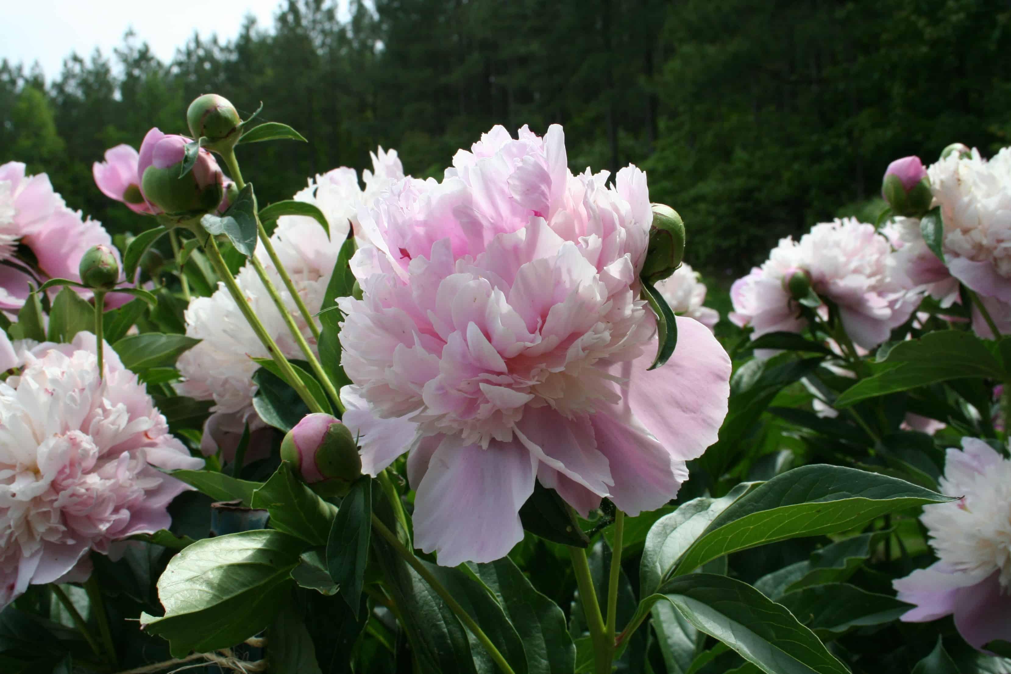 The Garden Update: What's Blooming at Home Garden Joy