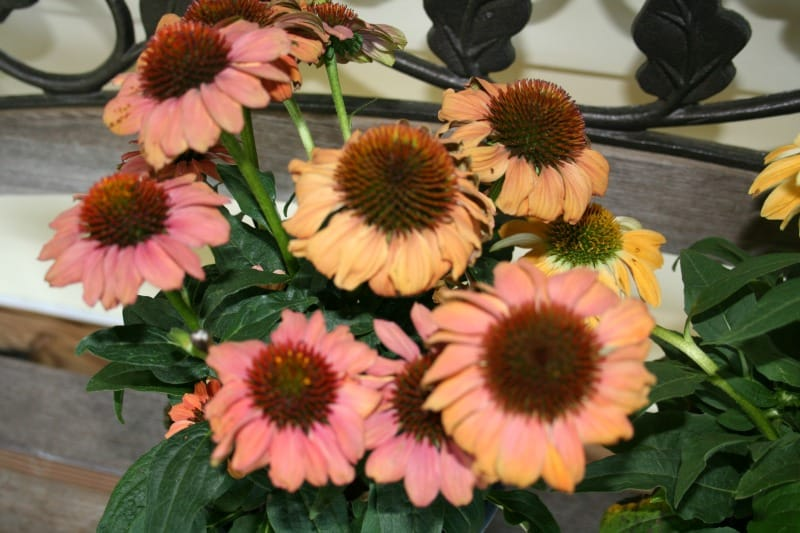 Planting Flowers in July, or What Not to Do in the Garden