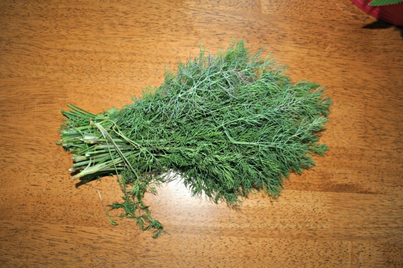 picture of dill herb drying on table