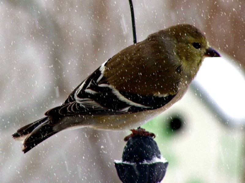 Tips for Helping Wild Birds in Winter