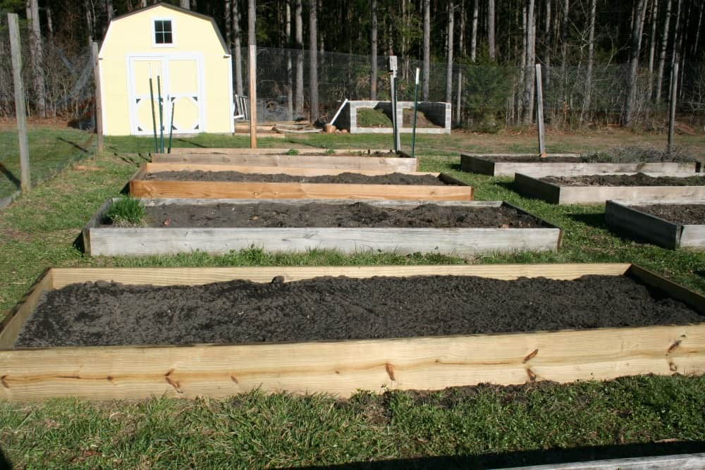 vegetable garden updates
