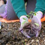 home garden joy blog