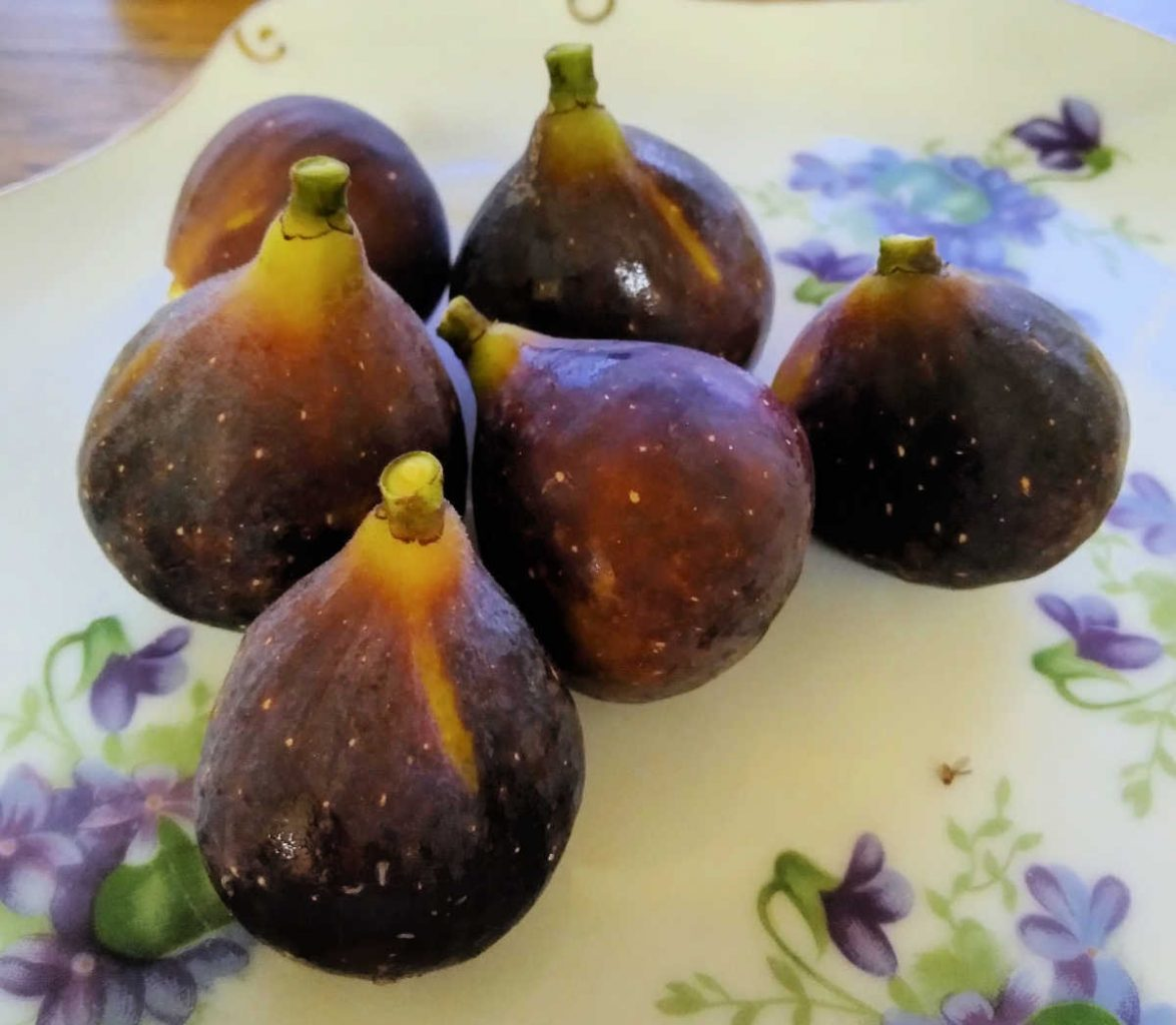 fresh brown figs on a plate