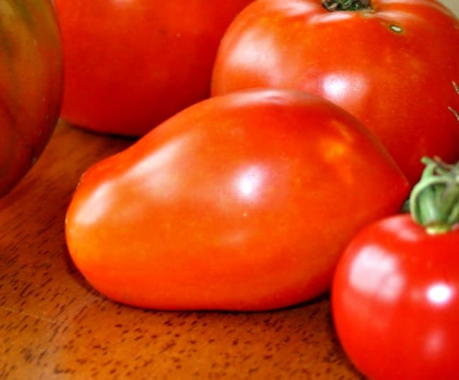 Hungarian paste tomato for making tomato sauce from scratch