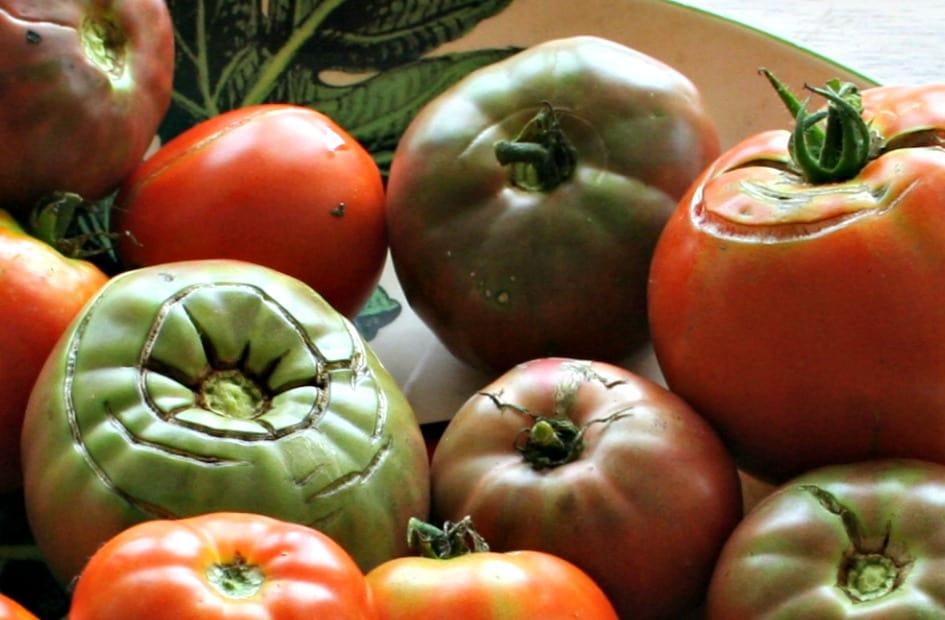 tomato plant problems