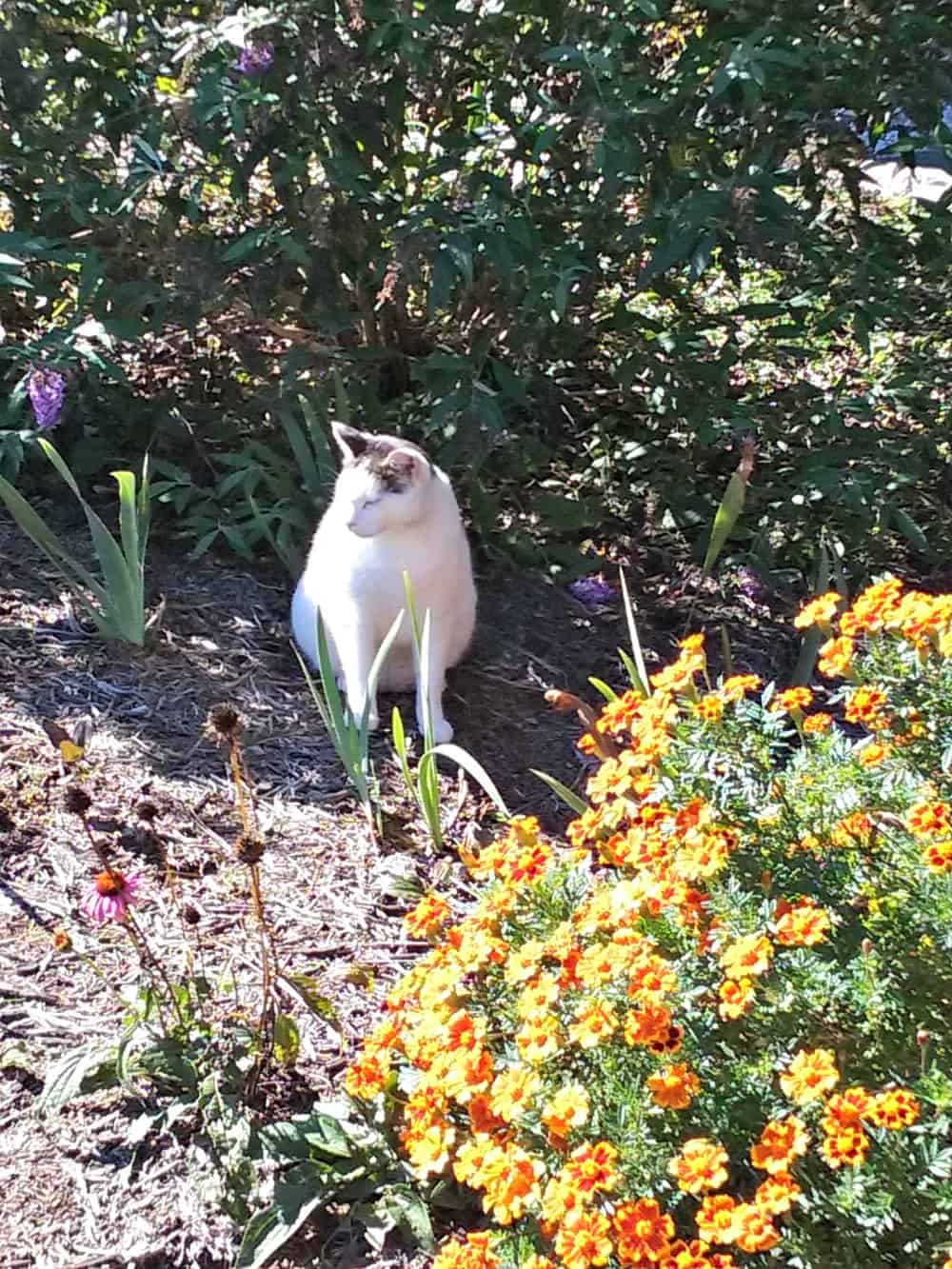 picture of a cat in the garden