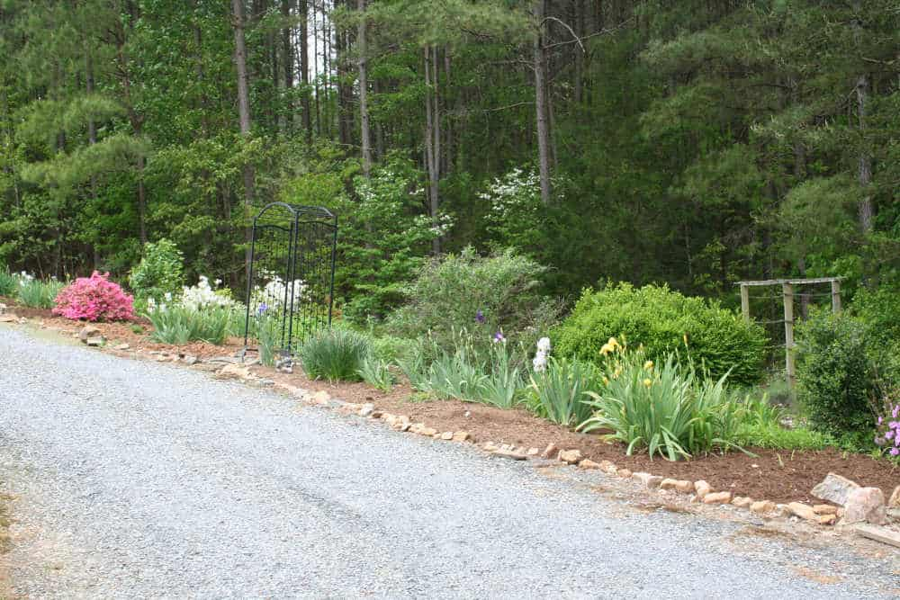 Perennial Garden Clean Up – Conquering the Weeds