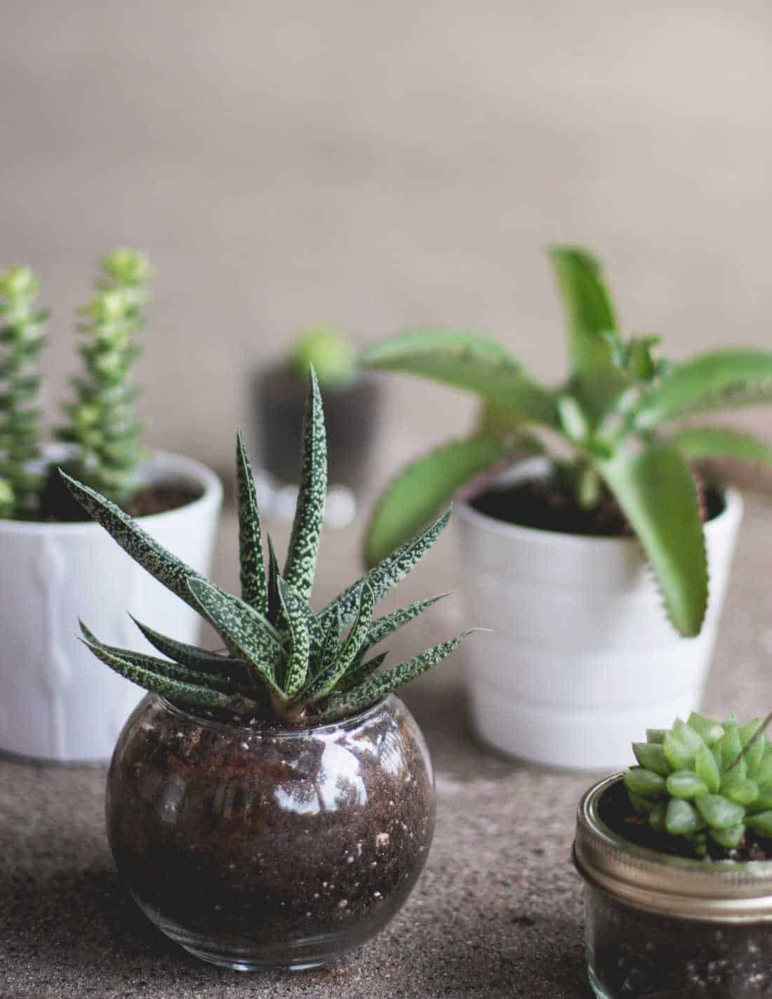 a picture of house plants