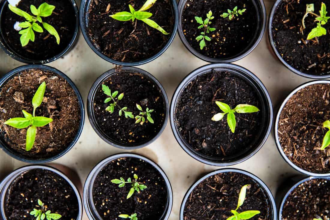 photo of vegetable seedlings in pots