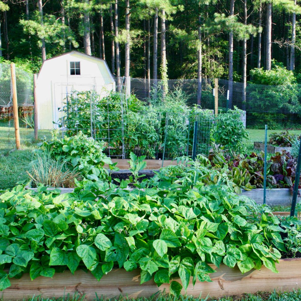 a raised bed vegetable garden