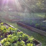 water droplets in sunbeams over a raised bed vegetable garden
