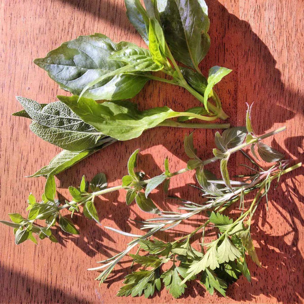oregano, rosemary, parsley, sage, and basil on a table