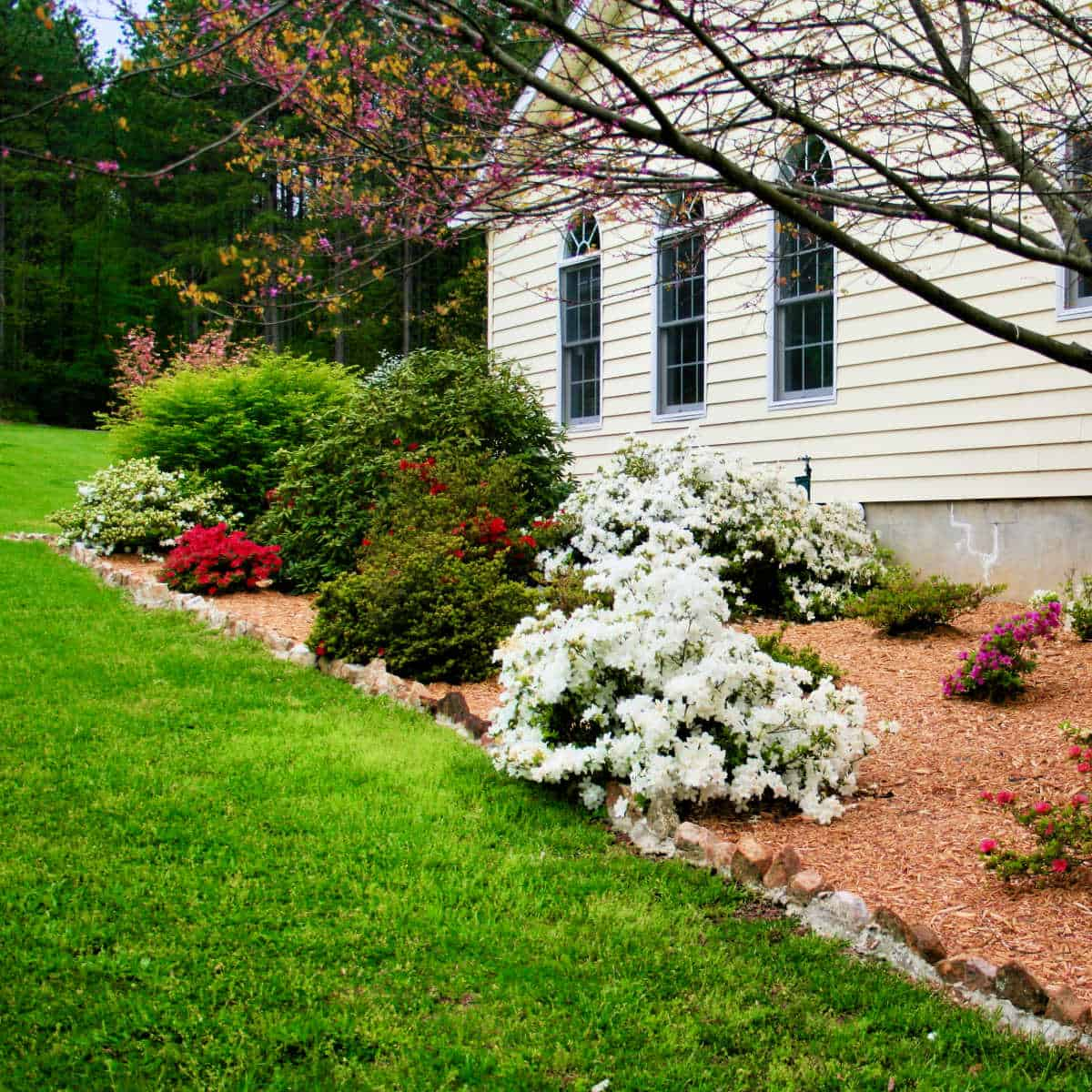 foundation plantings showing trees and shrubs to be pruned