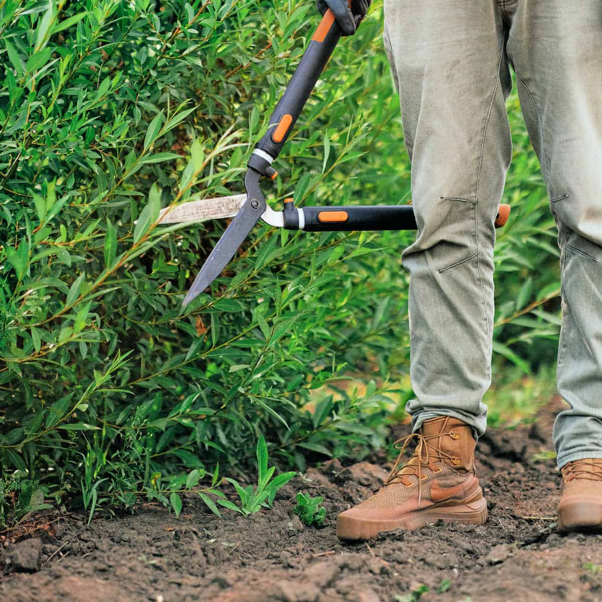a man standing in the garden with pruning loppers or hedge trimmers