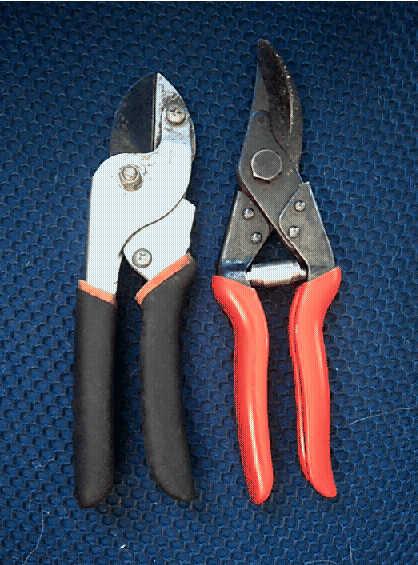 anvil pruners and scissor pruners